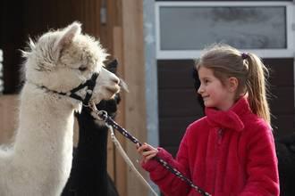 Mädchen führt ein Alpaka