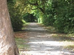 Wandern durch den Kocherwald bietet schöne Wanderweg