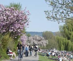 Radler vor Heidelberg