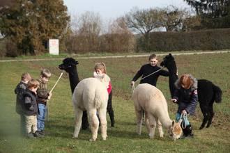 Gruppe Kinder mit Alpakas